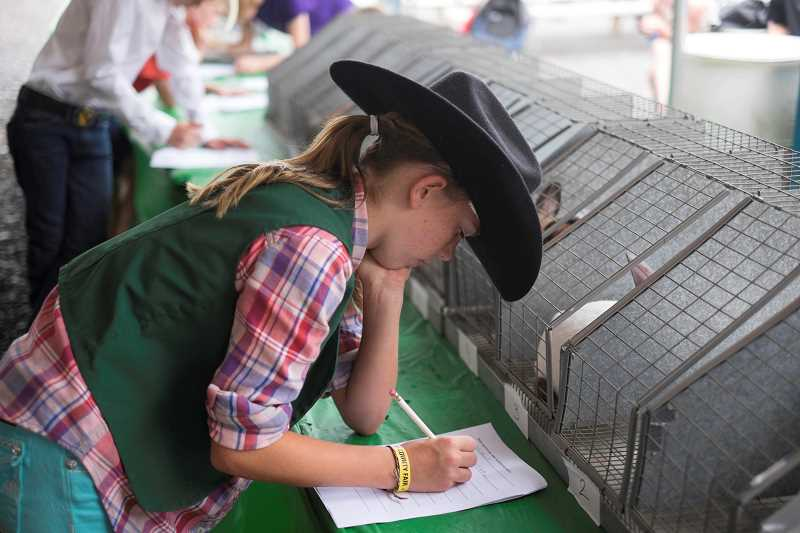 Photo Credit: RAY HUGHEY - Gresham's Libby Glassley works on her rabbit breed idenfication skills test Wednesday morning at the Clackamas County Fair.