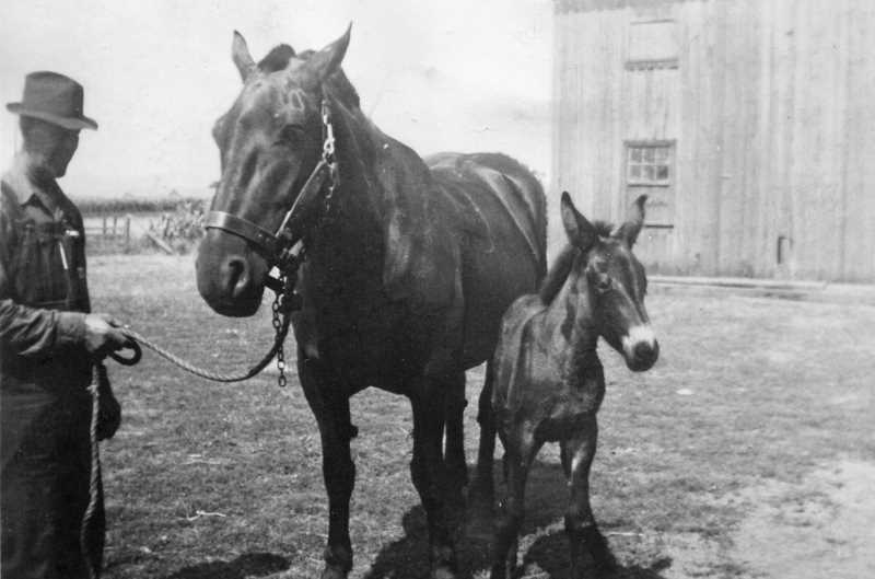 Photo Credit: COURTESY PHOTO - Peter Jansen stands with his new foal probably between 116 and 1919 on the Jansen farm he helped establish with his mother, Hendrina Janssen.