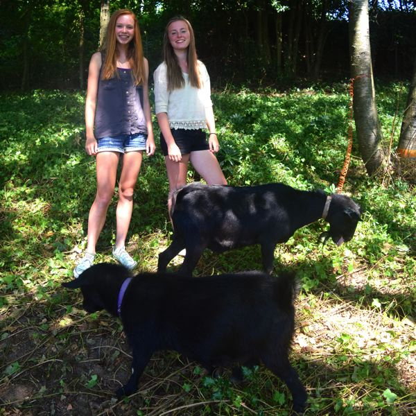 Photo Credit: CONNECTION PHOTO: DREW DAKESSIAN - Ellie Asplund and Maddie McCarter, 14, with Chai and Felix, two goats who are grazing yards throughout Hillsdale.
