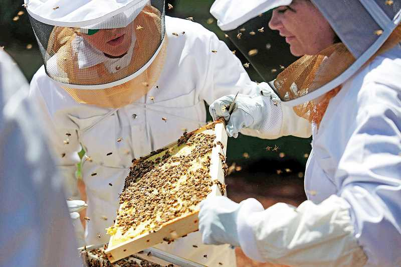Photo Credit: PMG FILE PHOTO - Bees in peril - A legislative task force has been charged with producing recommendations on how the state can protect bee pollinators.