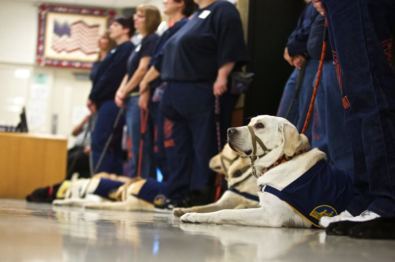 Photo Credit: TIMES PHOTO: JAIME VALDEZ - Dogs trained by inmates from Coffee Creek sit during the graduation of service dogs at Coffee Creek Correctional Facility.