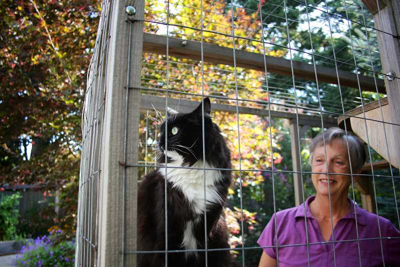 CONNECTION PHOTO: KELSEY O'HALLORAN - Joei Lattz likes to bring her cat, Maris, outside to her catio. The structure was one of 10 featured in a Portland-area tour on Sept. 12.