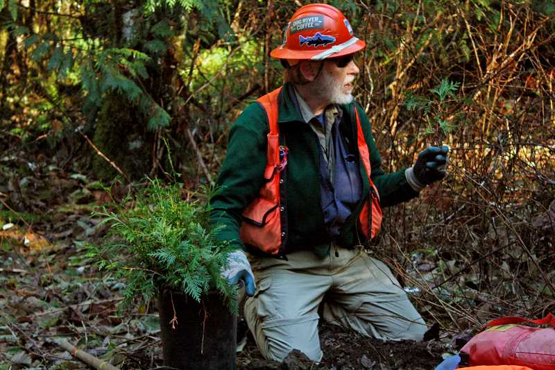 POST PHOTO: KYLIE WRAY - Russ Plaegar, restoration coordinater for Bark, gives a tutorial on how to correctly plant western red cedar seedlings.