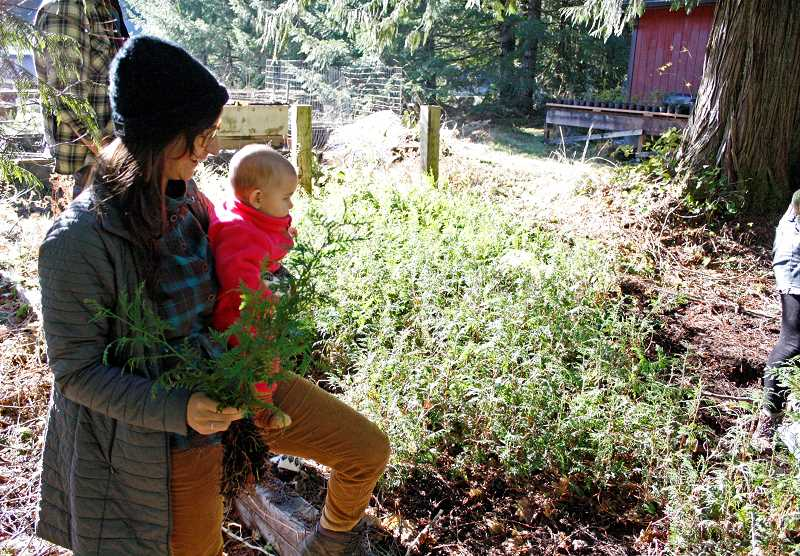 POST PHOTO: KYLIE WRAY - Saturday's littlest volunteer and her mom, from Bark, watch as cedar seedlings are uprooted and prepared to be moved to their new homes.