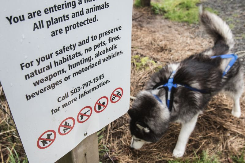 PAMPLIN MEDIA GROUP: JONATHAN HOUSE - A dog sniffs around a 'No pets' sign at the edge of Metro's Burlington Creek Natural Area in the North Tualatin Mountains.