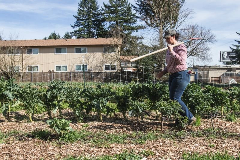 PAMPLIN MEDIA GROUP: JONATHAN HOUSE - Leah Rodgers walks among rows of her veggies at Rockwood Urban Farm.