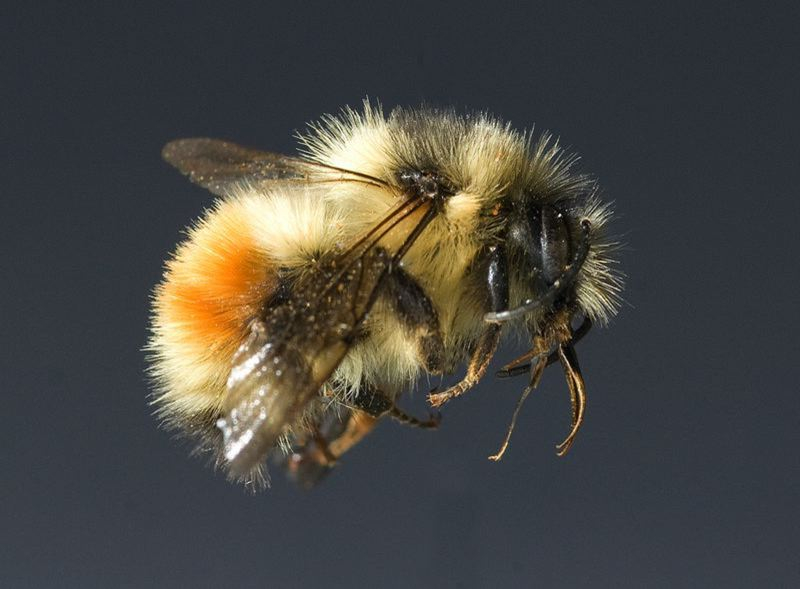 SUBMITTED PHOTO - Portland Community College is among just a handful of colleges named a Bee Campus affiliate.