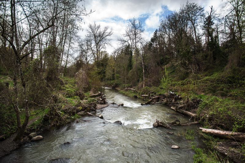 TRIBUNE PHOTO: JONATHAN HOUSE  - Johnson Creek, at the Tideman-Johnson Natural Area, is located less than a half-mile downstream of Precision Castparts plants in the Errol Heights neighborhood.
