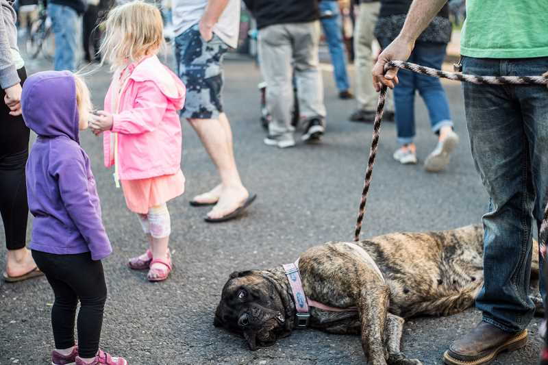 A canine market-goer takes a rest in the middle of Main Street during the weekly Forest Grove Farmers Market in 2015.