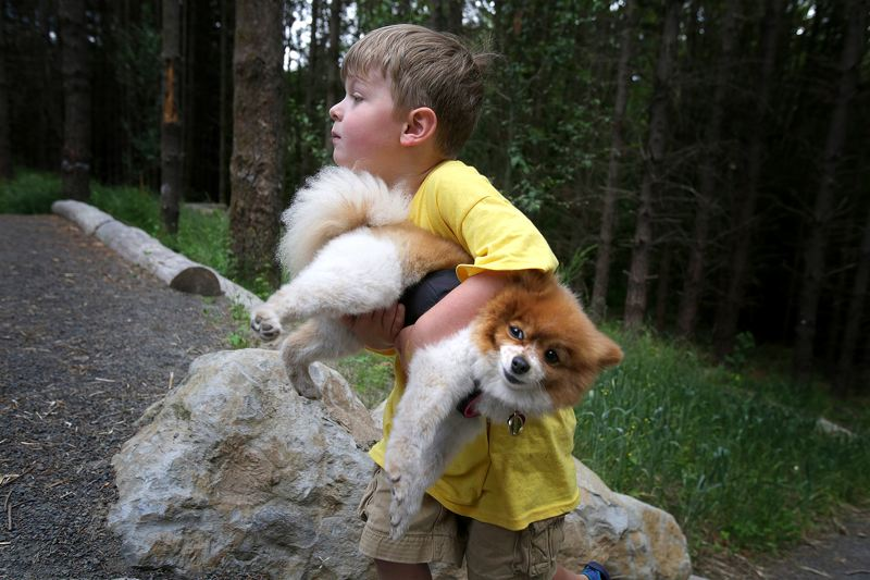 TRIBUNE PHOTO: JONATHAN HOUSE - Xander Perkins looks for the owner of a lost pomeranian as he carries him up the hill at Roger Tilbury Park in Beaverton. This photo won first place in lifestyle photography for a non-daily news source in the 2016 Northwest Excellence in Journalism awards.