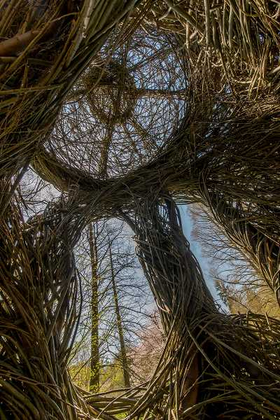 COURTESY PHOTO: ROB CARDILLO - A view from inside Patrick Dougherty' 'A Waltz in the Woods,' constructed in 2015 at Morris Arboretum of UPA in Philadelphia.