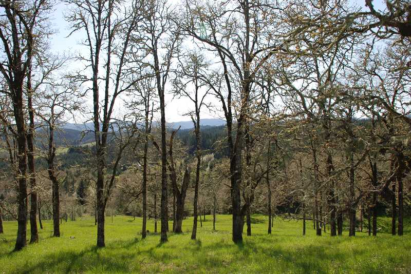 Funding, help available for oak tree owners