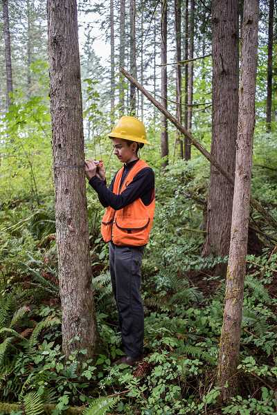 Julia Levigion of the Student Conservation Association measures a tree manually as part of the process of cataloging forest lands.