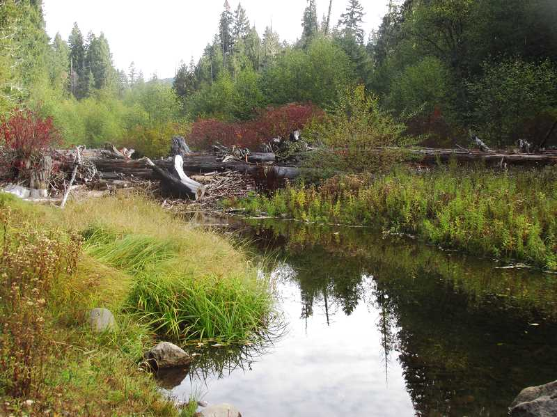 ESTACADA NEWS PHOTO: EMILY LINDSTRAND - A side channel of the Clackamas River runs through the Big Bottom wilderness area. Horning said this channel is beneficial to some fish that do not fare as well in the swiftly moving waters in the rest of the river.