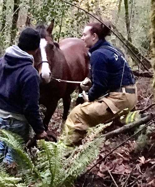 Lake Oswego Fire Department, Hunt Club employees rescue horse from ravine