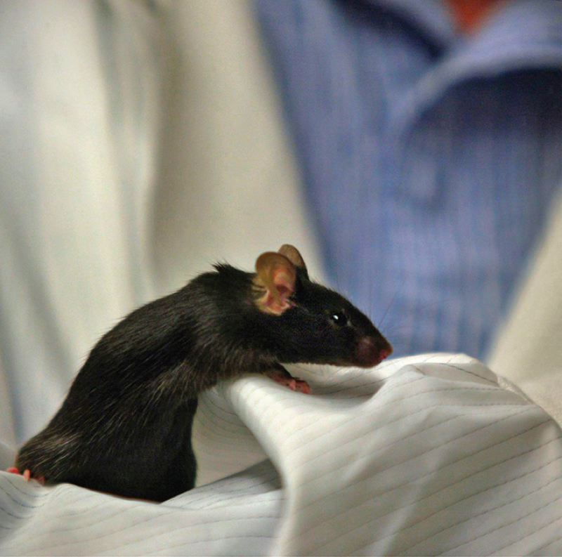 PAMPLIN MEDIA GROUP FILE PHOTO - University of Oregon scientists are using mice and their ability to hunt prey as a means of augmenting vision research.