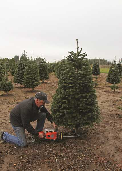 JULIA COMNES - Ron Franke (above) started Franke's Tree Farm in 1988 as a hobby. Now, Franke says his trees are selling out faster than ever since other local farms have closed.