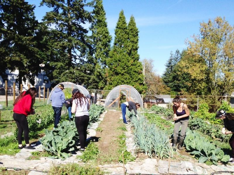 SUBMITTED PHOTO - New Urban High School students works in the second school farm organized by local nonprofit organization Schoolyard Farms. Last October, Schoolyard Farms began a tasting program featuring locally grown fruits and vegetables at NUHS.