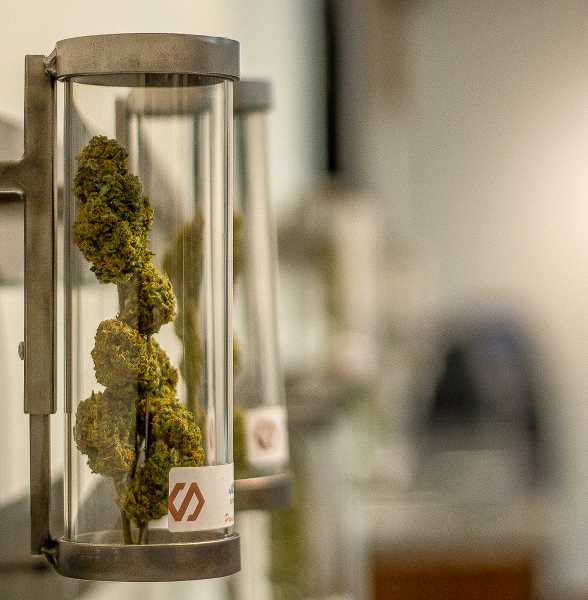 TRIBUNE FILE PHOTO - Only a handful of pot shops will be allowed to sell marijuana to recretaional customers starting on Jan. 1, due to a backlog of unapporved applications with the Oregon Liquor Control Commission.