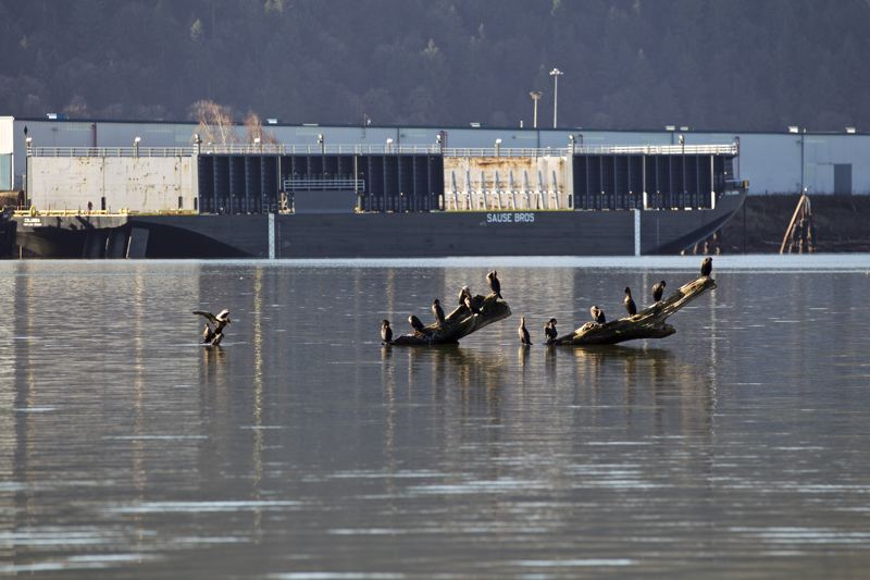 TRIBUNE PHOTO: JAIME VALDEZ - The EPA announced a final cleanup plan for a 10-mile stretch of the Willamette River known as the Portland Harbor Superfund site on Friday. It will cost more than $1 billion and 13 years to complete.