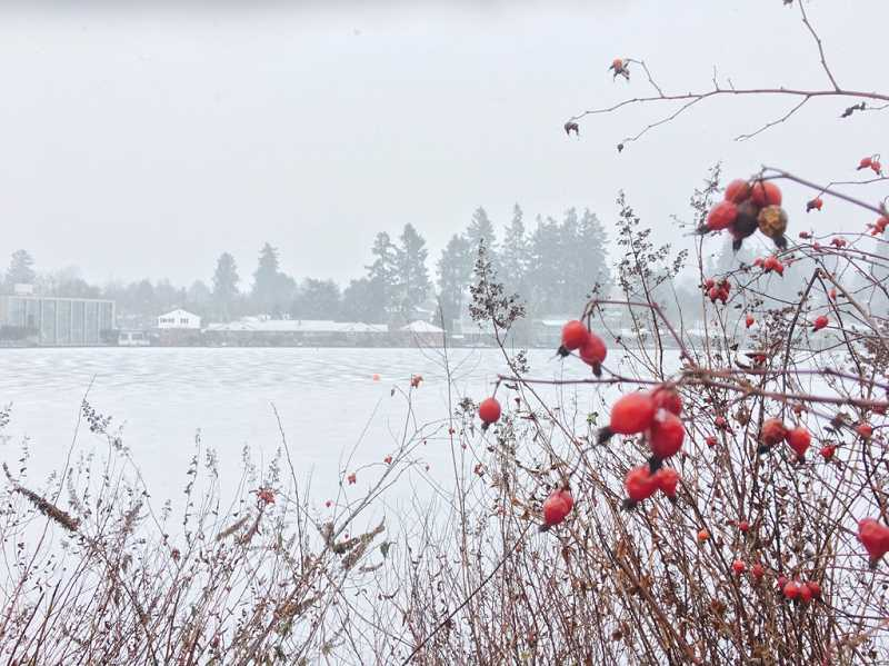 SUBMITTED PHOTO: LAKE OSWEGO FIRE DEPARTMENT - Despite the snow and freezing rain, it was still possible to find moments of quiet beauty all around Lake Oswego. This photo looks out onto Lakewood Bay.