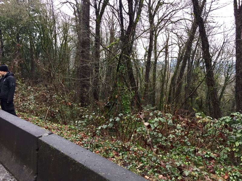 COURTESY PHOTO: PPB - Portland homicide detectives are searching for clues to the death of a person whose body was found down this hillside Tuesday morning near Southwest Barbur Boulevard.