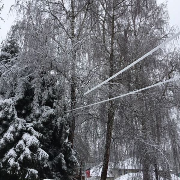 SUBMITTED PHOTO: WEST LINN POLICE DEPARTMENT - Downed trees and power lines caused by the weight of the snow led to widespread power outages across the city.