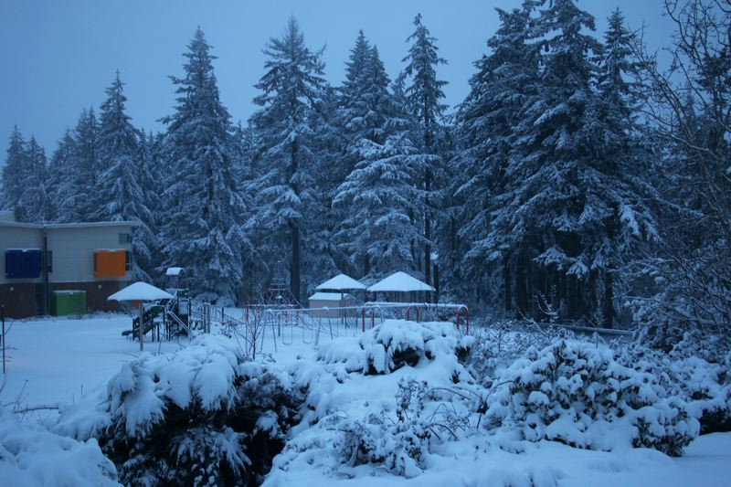 TIDINGS PHOTO: IAN MONIHAN - Tall firs behind Trillium Creek Primary appear as if they had been flocked for the holidays.