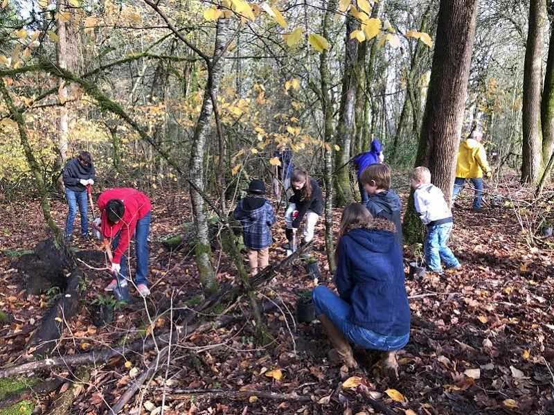 SUBMITTED PHOTO: COURTESY OF ARYA BADIYAN - Lakeridge Junior High School seventh-grader Jada Badiyan and her fellow Ash Street Virtues Class members and teachers, along with parents and other supporters, performed community service at Hallinan Heights Woods on Dec. 4.
