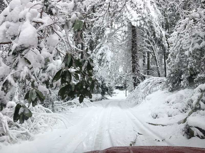 SUBMITTED PHOTO: LAKE OSWEGO FIRE DEPARTMENT - Neighborhood roads throughout Lake Oswego were clogged with snow Wednesday; many also were blocked by downed trees, downed power lines -- or both.