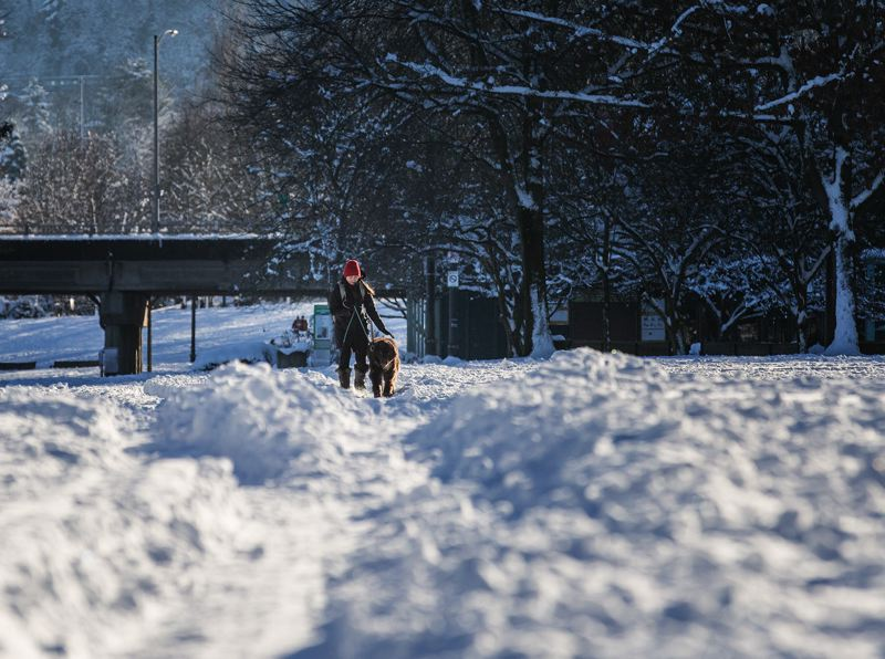 TRIBUNE PHOTO: JONTHAN HOUSE - Pet owners brought their dogs out to play in the snow along the waterfront Thursday, Jan. 12.