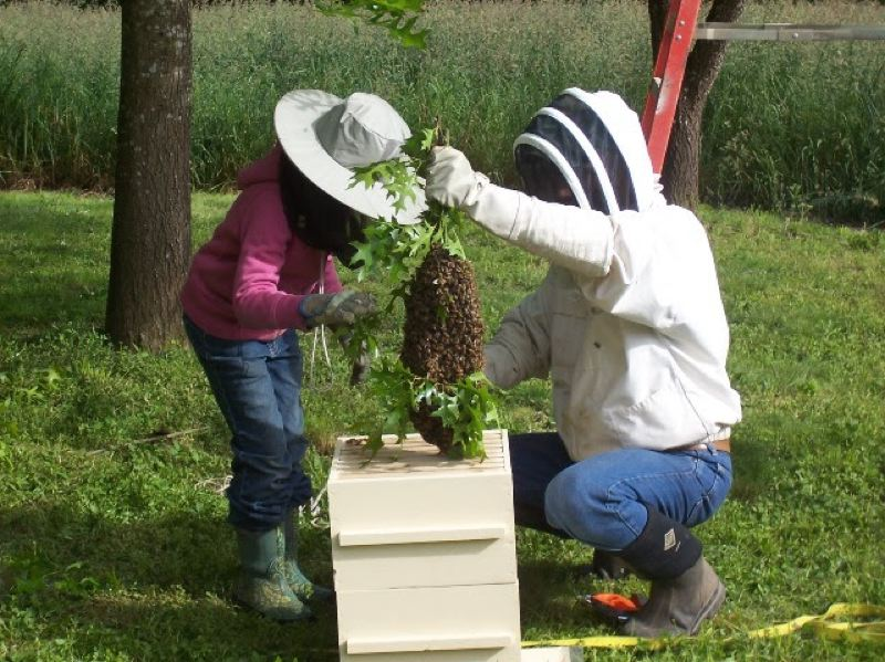 COURTESY PHOTO - Jeff Clark will present an introduction to beekeeping at the North Plains Library.