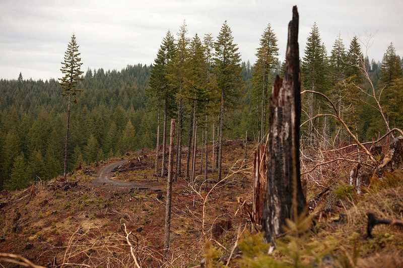 NEWS-TIMES FILE PHOTO - Conservationists worry that the lawsuit will pressure the state to cut too much timber.