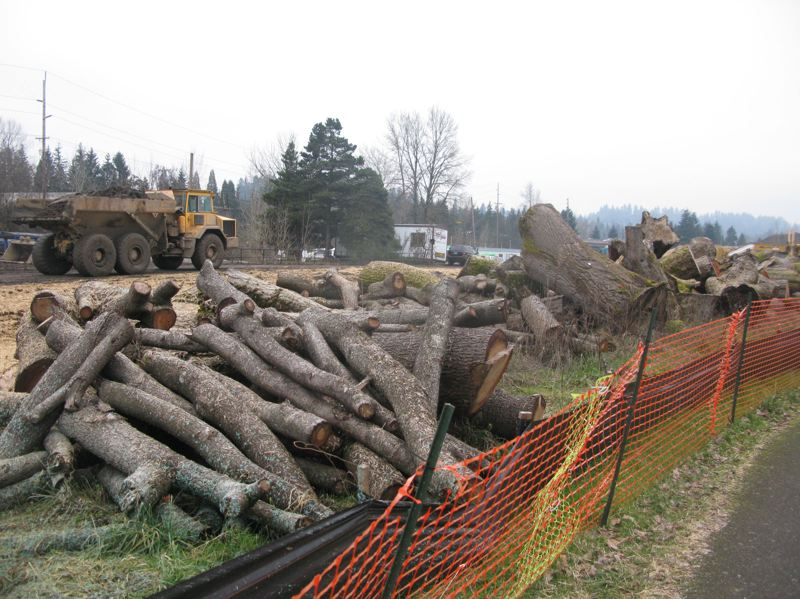 Beavers, development, weather take toll on trees along Clackamas River