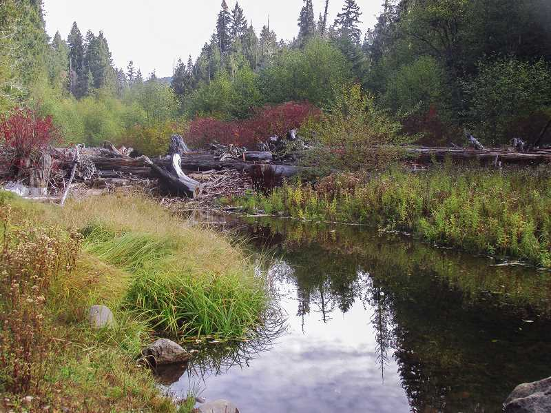 FILE PHOTO - A side channel of the Clackamas River runs through the Big Bottom wilderness area, located in the Mt. Hood National Forest.  Leaders at Bark, a grassroots advocacy group for the forest, are concerned about the influence President Trump's policies will have on public land throughout the U.S.