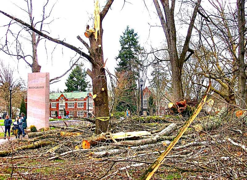 RITA A. LEONARD - Damage to deciduous trees was extensive, in the January snowstorm, near the main entrance to Reed College on Woodstock Boulevard.