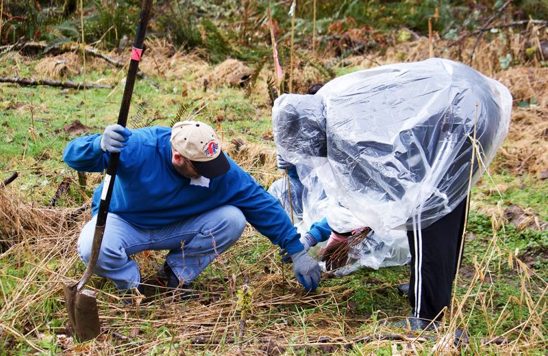 OUTLOOK PHOTO - About 30 volunteers joined the efforts at the Springwater Woods on Saturday to plant native species along the banks of Johnson Creek.