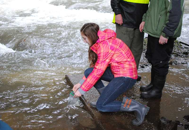 NEWS-TIMES PHOTO: STEPHANIE HAUGEN - Elsa Riddle released rainbow trout fry into Scoggins Creek Tuesday, March 7, after watching them hatch and take their first swims in a classroom tank.