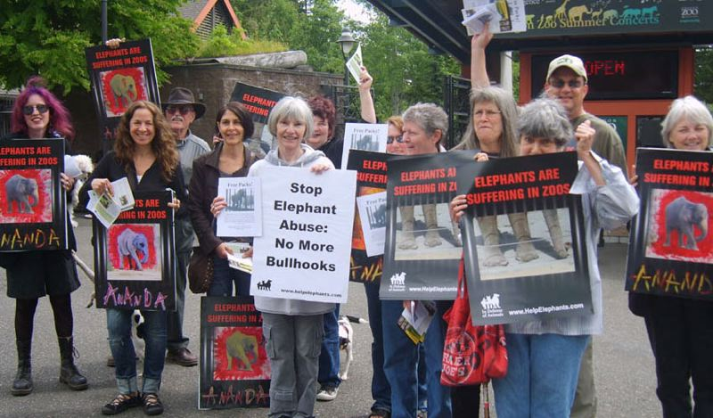 COURTESY PHOTO - Volunteers with Free the Oregon Zoo Elephants hold frequent protests outside the zoo's entrance.