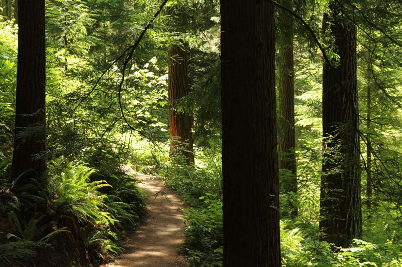COURTESY: HOYT ARBORETUM - Hoyt Arboretum has 12 miles of trails to explore, and it'll host guided tours for Arbor Month in April — including Magnolia and Spring Blossom tours.