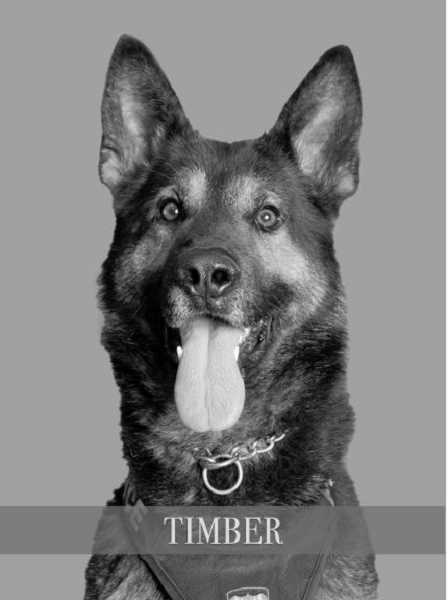 HILLSBORO POLICE DEPARTMENT - Timber will get a protective vest.
