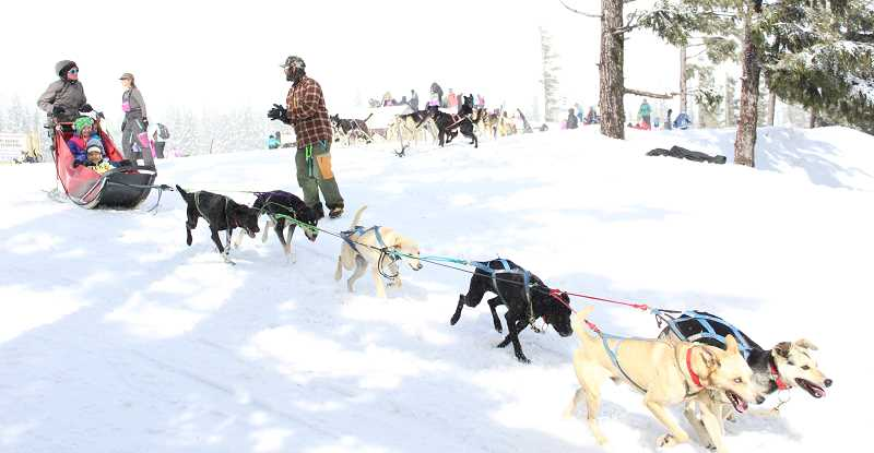 Immersed in the Iditarod