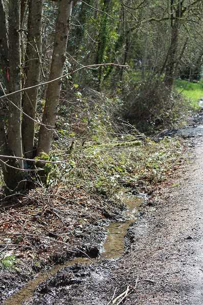 CONNECTION PHOTO: HANNAH RANK - Water flow is visible around the perimeter of the proposed development site on Southwest 48th Avenue in the Hayhurst neighborhood of Southwest Portland.