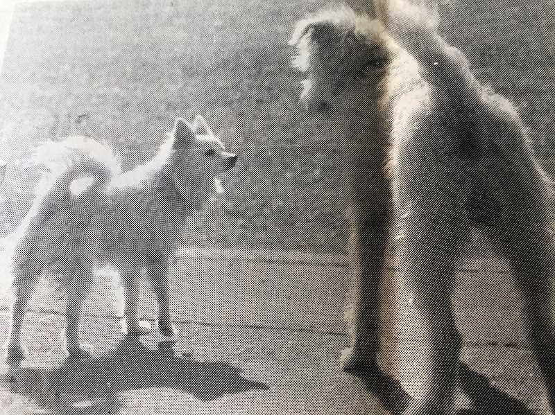 ARCHIVE PHOTO - In 1987, a little dog met a big dog while walking down Zobrist Street.