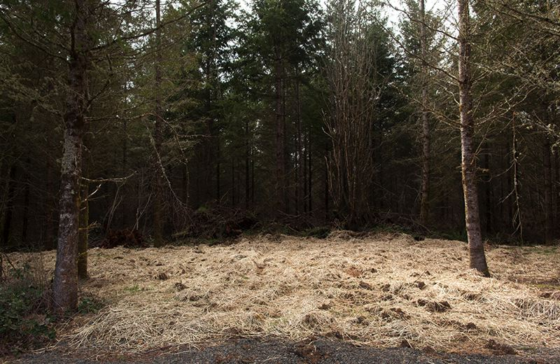 TRIBUNE PHOTO: JAIME VALDEZ - Straw covers Packys grave in an isolated natural area owned by Metro in Clackamas County. Three other elephants from the Oregon Zoo are buried nearby.