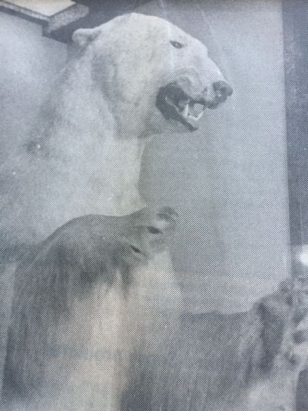 ARCHIVE PHOTO - This polar bear was one of Mike Park's many taxidermied animals that occupied the Safari Club.