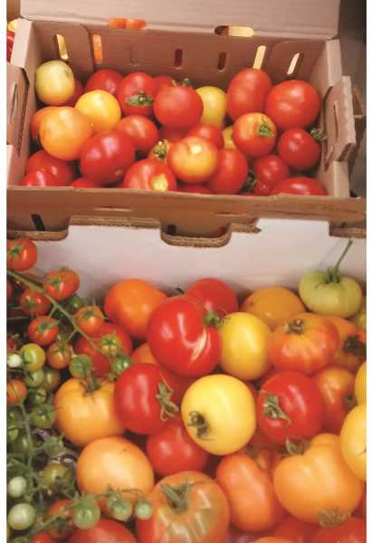 RISE ESTERGREEN - Local farmers donate fresh tomatoes and other fruit and produce in season.