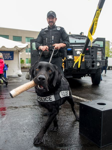 OUTLOOK PHOTO: JOSH KULLA - Gresham Police Officer Jeff Culp and his K9 partner Cash take part in an exercise aimed at showing off Cash's drug detection skills Saturday at CityFest.