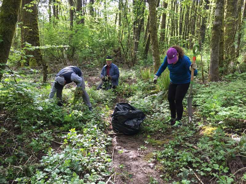 SUBMITTED PHOTO: PAUL LYONS - Volunteers work to clear an invasive species known as 'Stinky Bob' from Springbrook Park.