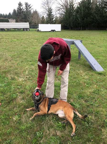 COURTESY OF LISA GOSSETT - Andrew Fujii gets acquainted with Irma on May 6 while installing her new obstacle course.